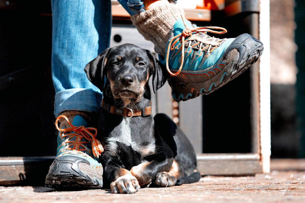 karin-siska-hundetraining--Welpen