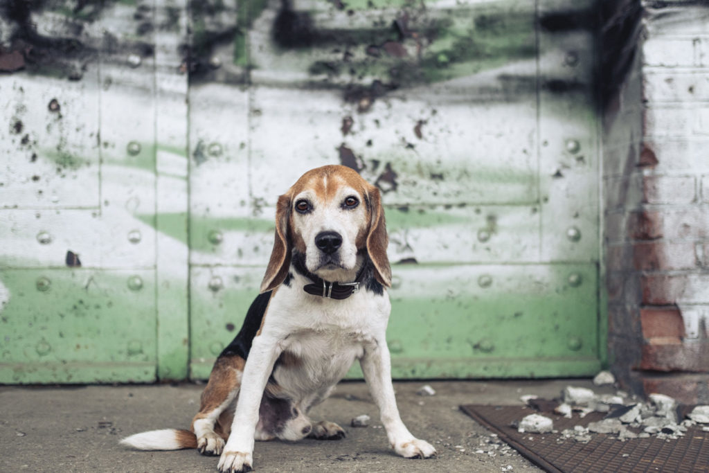 karin-siska-hundetraining-lost-and-found