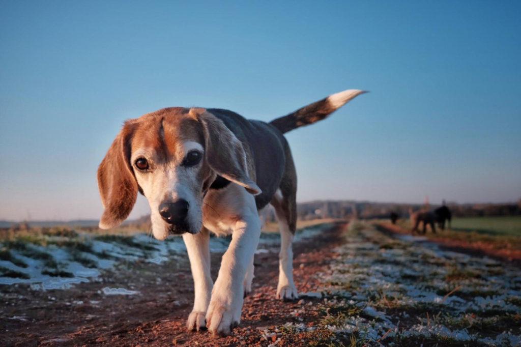 karin-siska-hundetraining-mantrailing