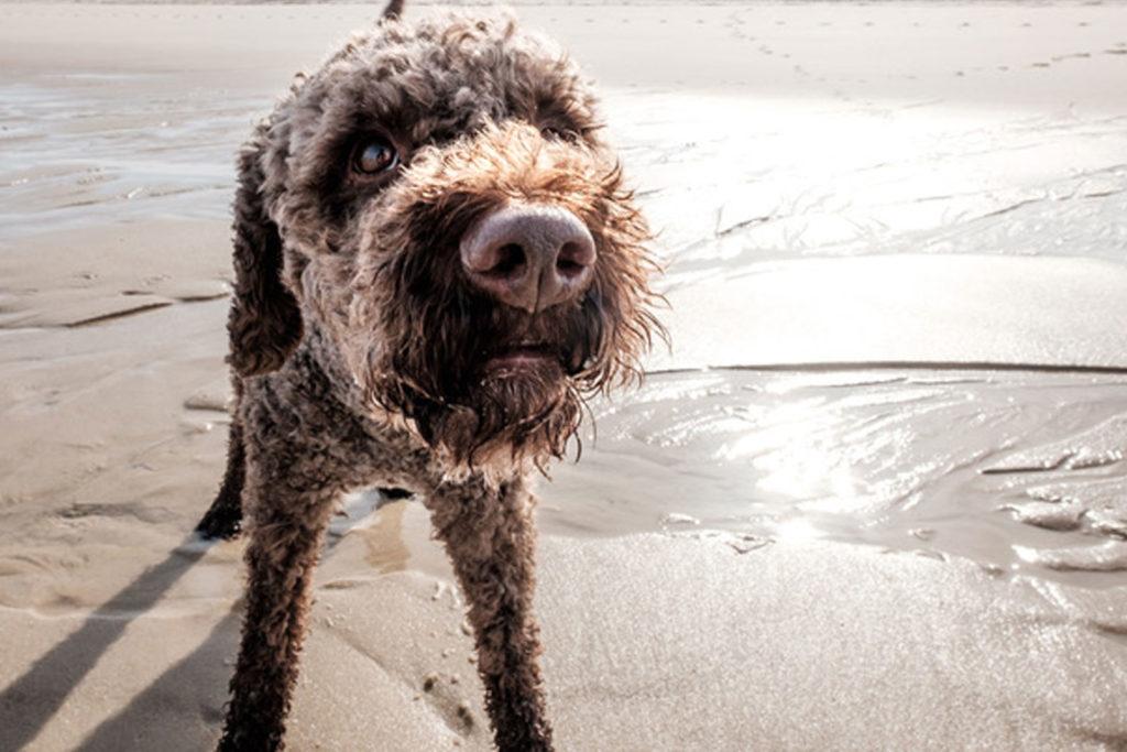 karin-siska-hundetraining-workshop-kann-er-nicht